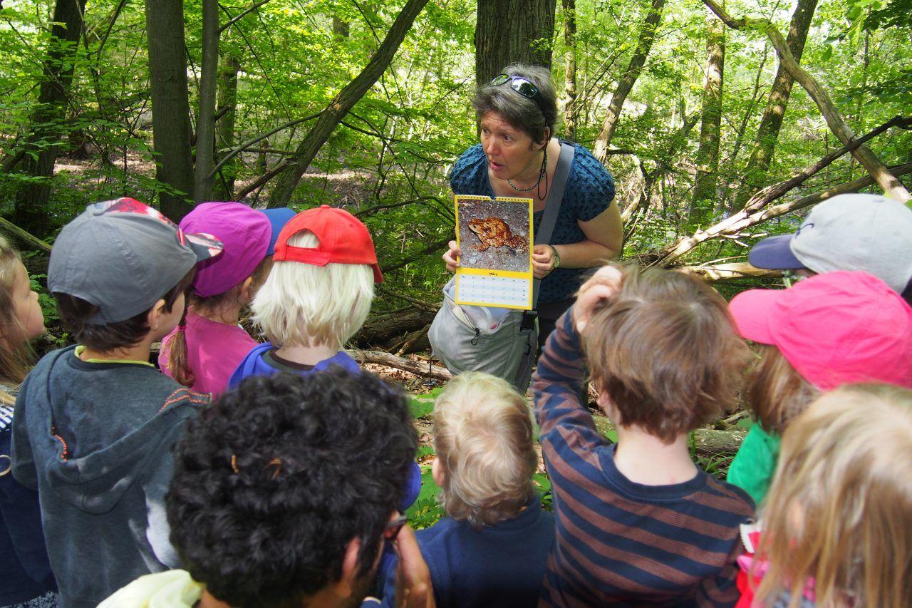 Eine Gruppe von Kindern schaut sich im Wald ein Bild von einem Frosch an, das ihnen eine Frau vom Nabu zeigt.