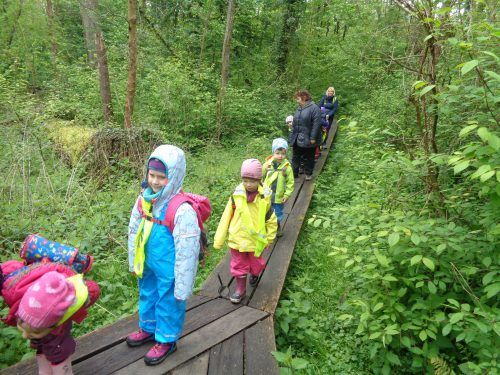 Auf dem Bild sind Kindergartenkinder zu sehen, die durch den Wald laufen.