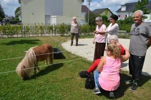 Sommerfest SZ Knielingen