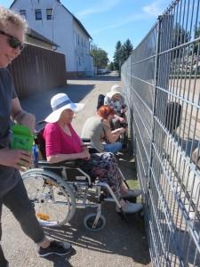 Menschen im Rollstuhl sitzen an einem Straußgehege und füttern die Tiere.
