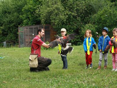 Kleine Kinder besuchen eine Falknerei.