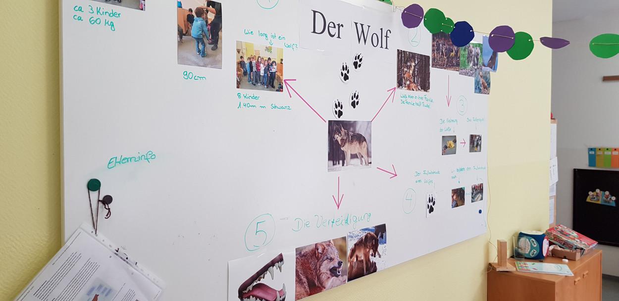 Pinnwand mit Wolf-Fotos.