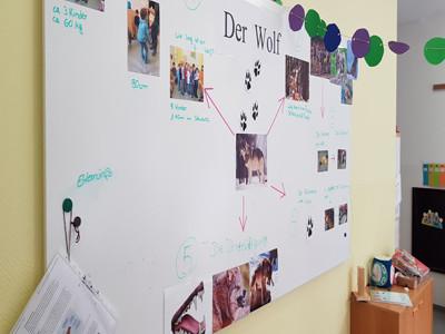 Eine Pinnwand mit Wolf-Fotos und Infos über Wölfe.
