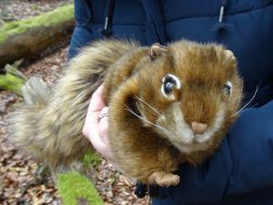Ein Stoff-Eichhörnchen