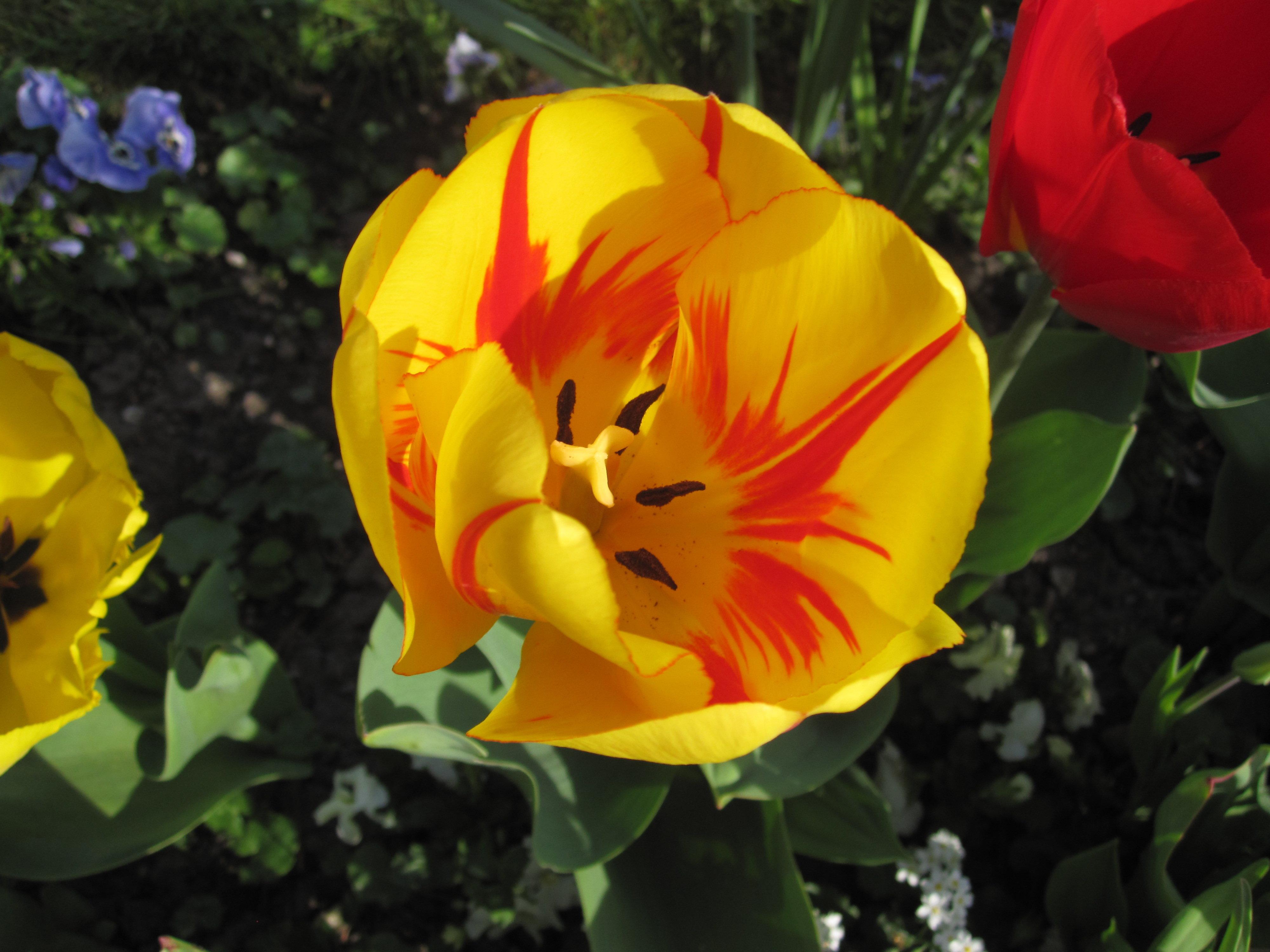 Ein Bild von einer gelb-roten Blumenblüte.