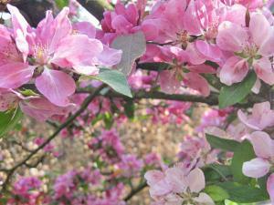 Pinfarbene Blumen.
