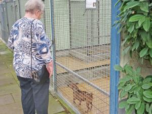 Eine Seniorin steht vor einem Zwinger und schaut einen kleinen braunen Hund an.