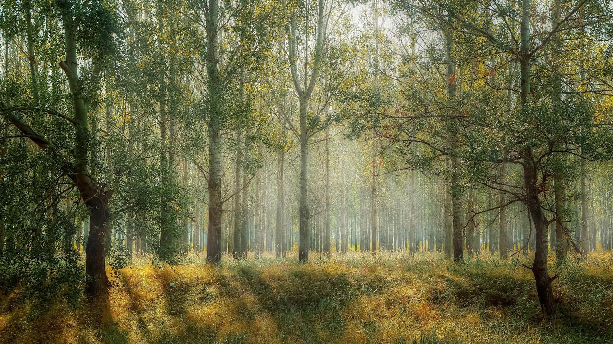 Bild von einem grünen Wald.