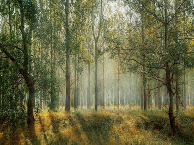 Grüner Wald mit Sonnestrahlen.
