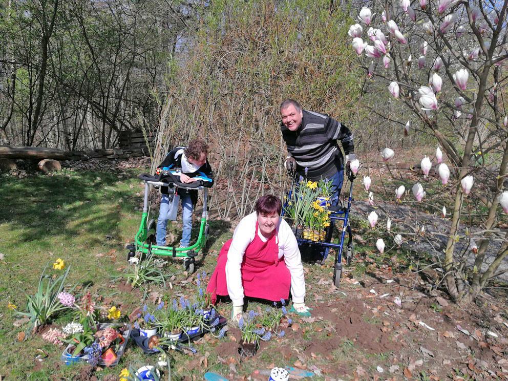 Drei Menschen mit Behinderung stehen auf einem Beet und pflanzen Blumen ein.