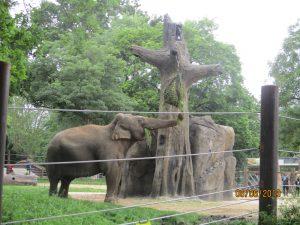 Blick auf das Elefantengehege im Karlsruher Zoo.