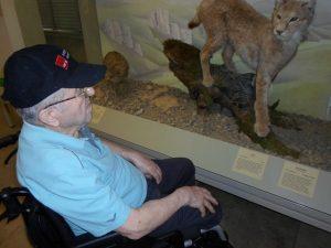 Ein Mann im Rollstuhl sitzend schaut sich ein ausgestopftes Tier an.