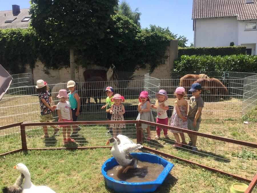 Kindergartenkinder stehen betrachten die Gänse des Streichelzoos