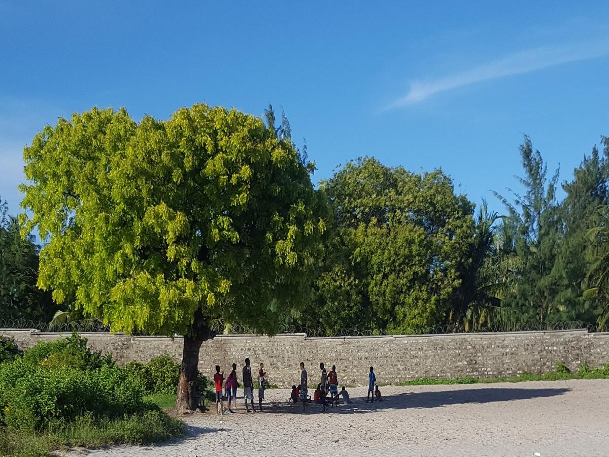 Ein Schattenbaum