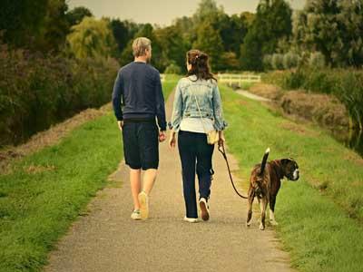 Ein Mann und eine Frau gehen mit einem Hund im Grünen spazieren.